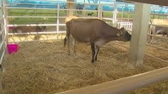 State Fair of Texas's exhibit showcases livestock stewardship