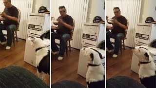 Dog Looks Away When Caught Staring At Food