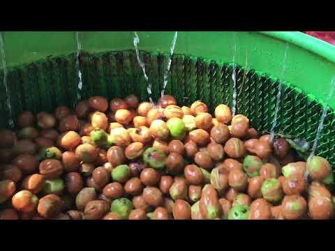 Kadıoğlu Nutmec 180ED Ceviz Soyma Makinesi