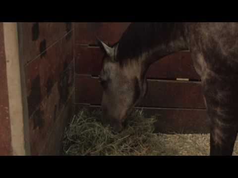 Horse Feeding and Nutrition | Purina Animal Nutrition