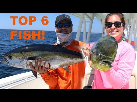 6 Top saltwater fish to EAT! thumbnail