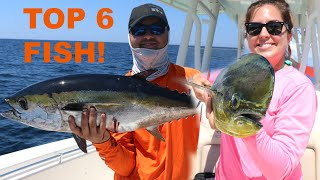 6 Top saltwater fish to EAT!