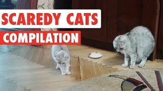 Scaredy Cats Video Compilation 2016