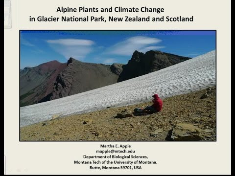 Alpine Plants and Climate Change in Glacier National Park, New Zealand and Scotland
