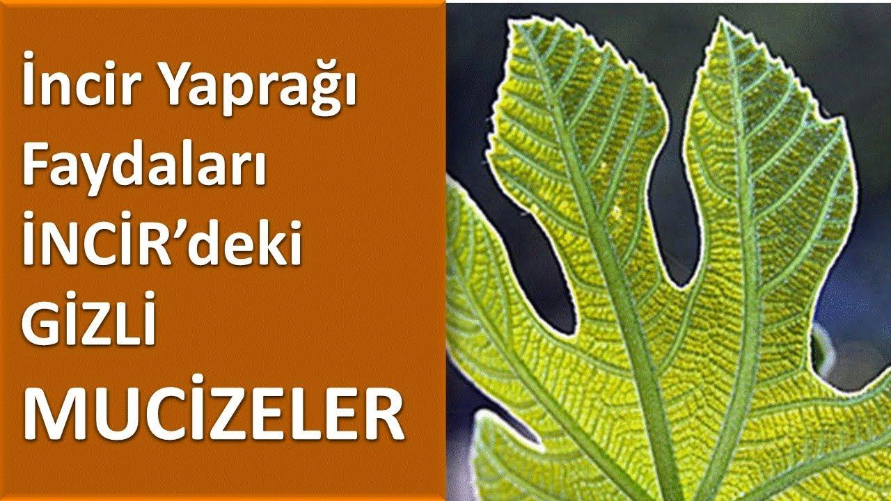 Asma yaprağının faydaları nelerdir Asma yaprağı kürü nasıl yapılır