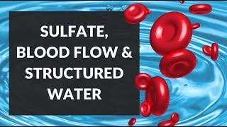 Sulfation, EZ Water & Red Blood Cells: Maintaining Blood Flow