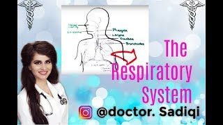 The respiratory system EXPLAINED UNDER 5 MINUTES!!!
