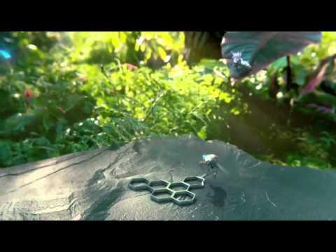 Blush    Electric  Music Video Premiere