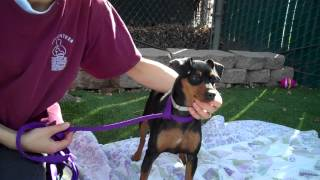 Chica A4542485