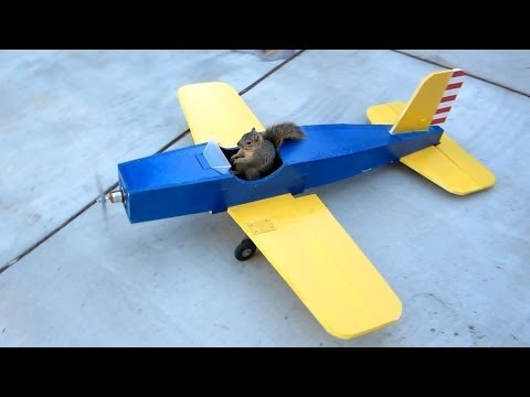 Squirrel Steals Airplane
