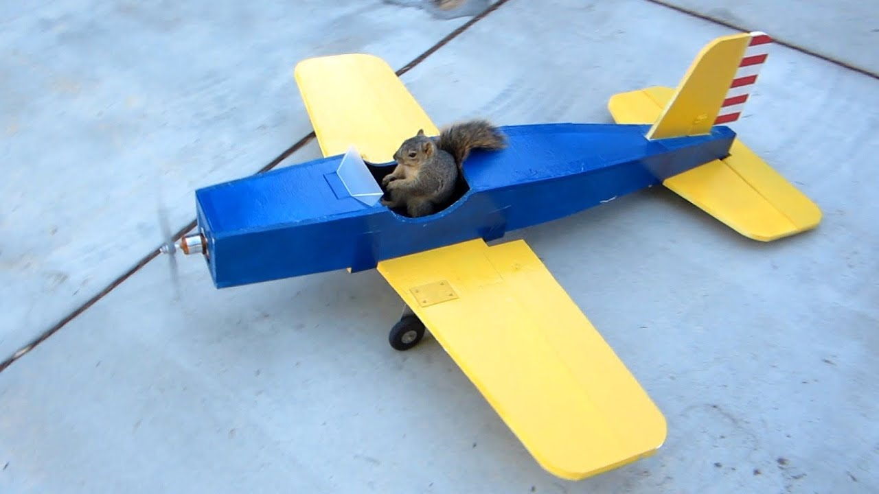maxresdefault squirrel steals airplane youtube,Remote Control Airplane Funny Memes