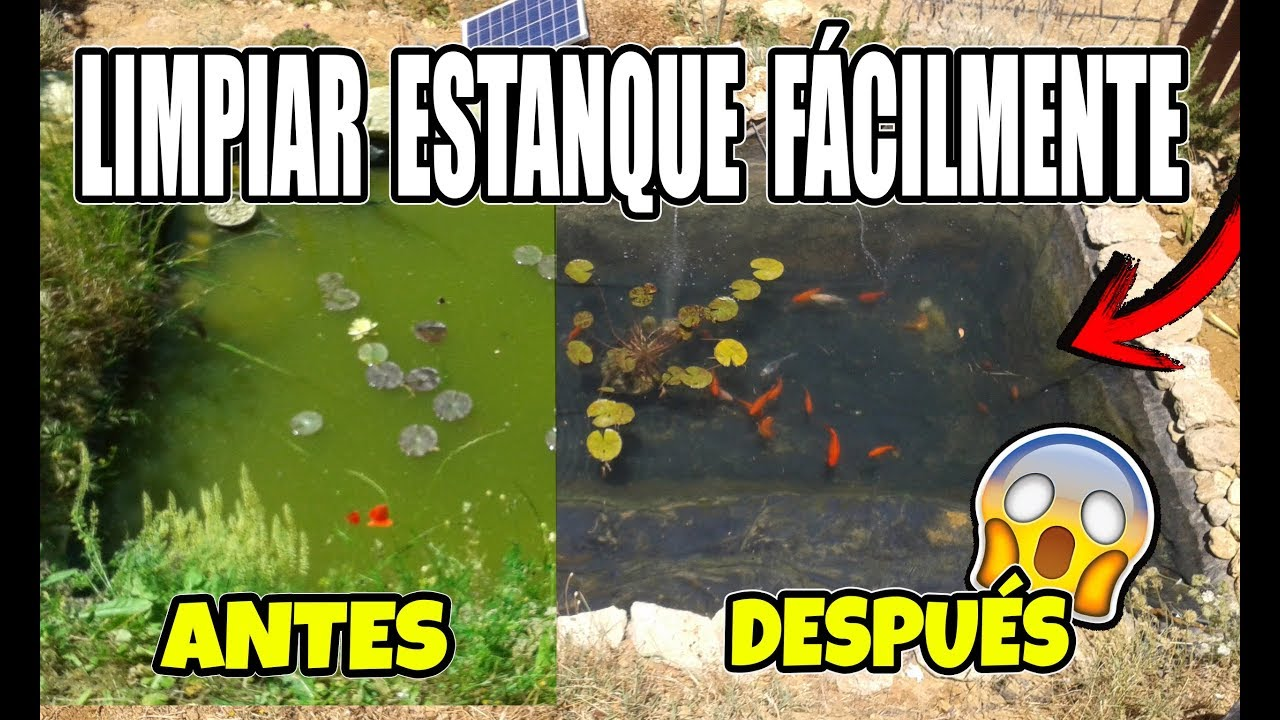 C mo limpiar estanque con peces f cil y r pido hd youtube for Peces para limpiar estanques