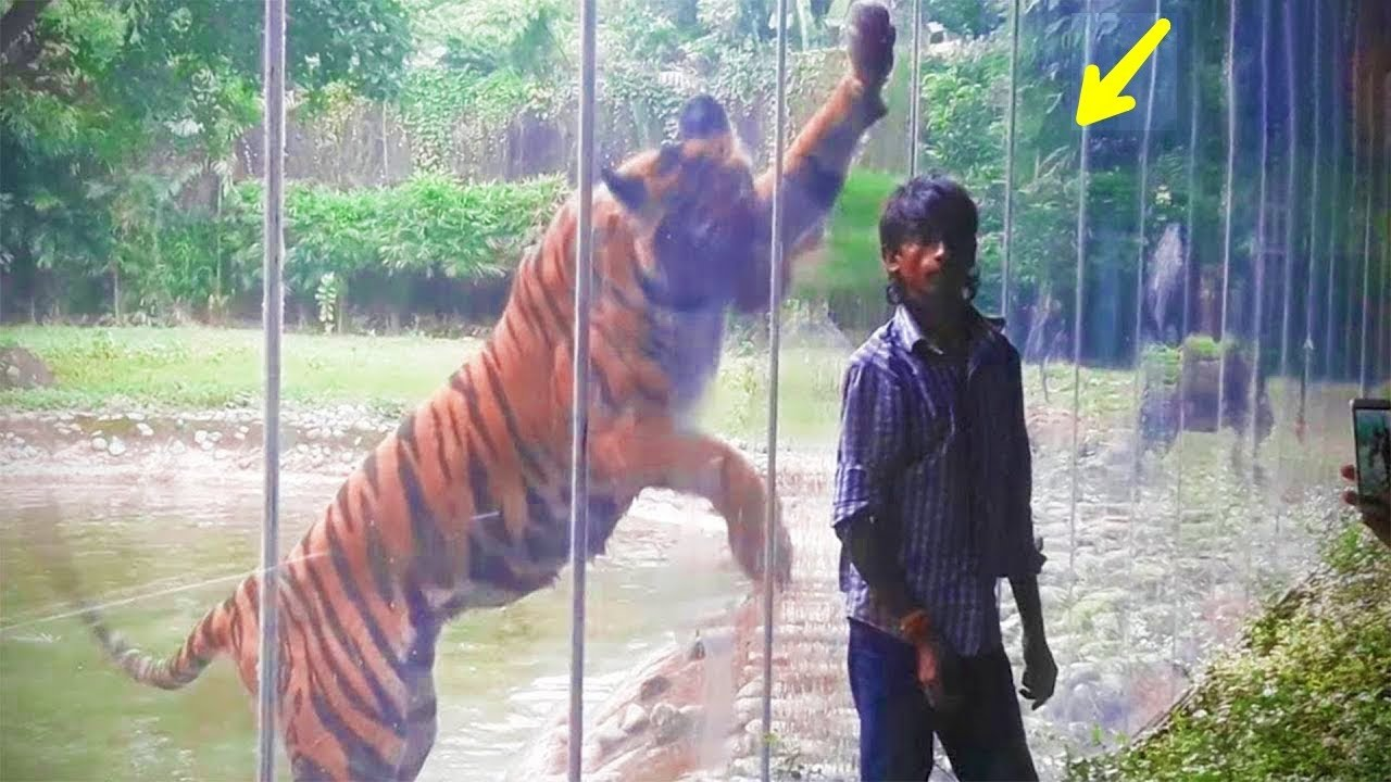 দেখুন কি ঘটলো যখন চিড়িয়াখানার কাঁচ ভেঙে গেল | When the glass wasn't strong enough in Bangla