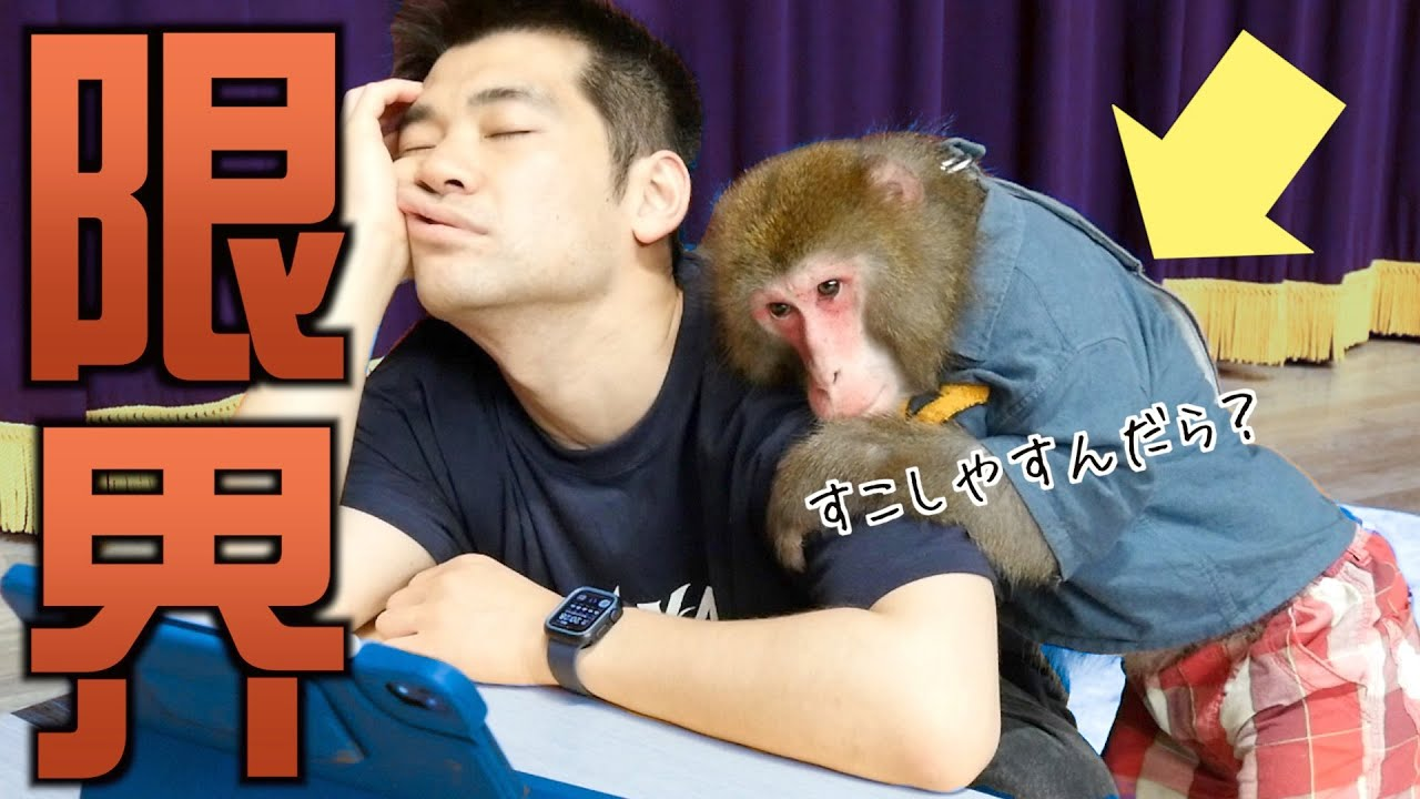 【嫁かよ】仕事で疲れた僕を見て、お猿さんがとった行動がすごい。