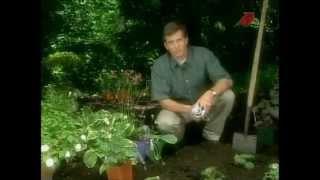 видео Что можно посадить в тени из плодовых деревьев и кустарников?