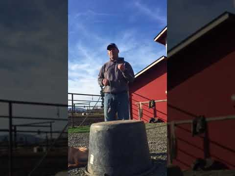 """Barrel Training 101"" Explanation with Danton Stock Dogs"