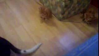 kittens thumbnail