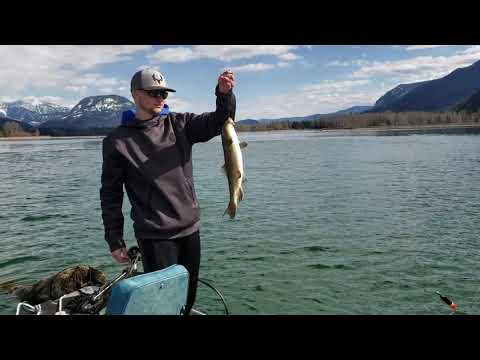 Walleye/pike Fishing On Lake Pend Oreille Part 2.