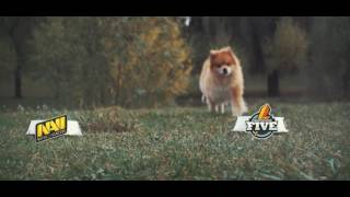 Пёс-прогноз: Natus Vincere против Fantastic Five