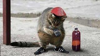 Кот гопник СМОТРЕТЬ ВСЕМ.