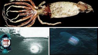 Неопознанные плавающие объекты