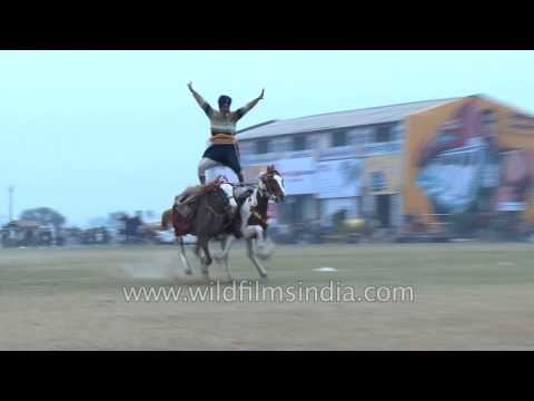Sikh warriors ride horses with iron spears and swords