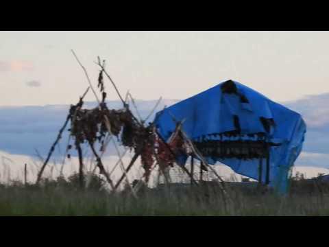 видео: Ход Лосося (Горбуша) из бухты в речку на нерест. Прилив.