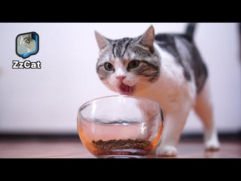 Cat Food Glass Bowl