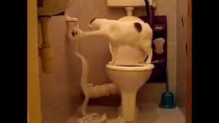 Cat on the toilet( кот на унитазе)