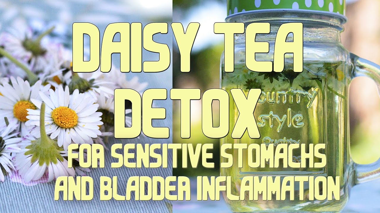 Healthy Herbal Daisy Tea Detox Quicky Youtube