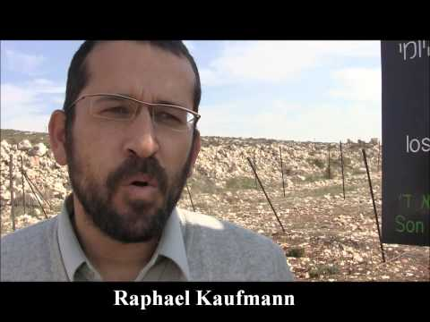 Plant Vines in Shomron