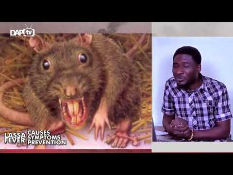 Stay free from Lassa fever in Nigeria - pidgin