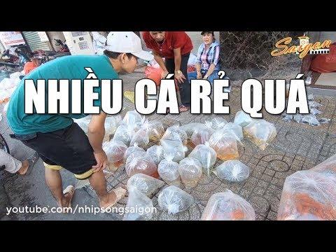 CHỢ CÁ CẢNH SÀI GÒN CHỢ LỚN – Khám Phá Các Loại Cá Cảnh Đẹp Nhất Việt Nam #1
