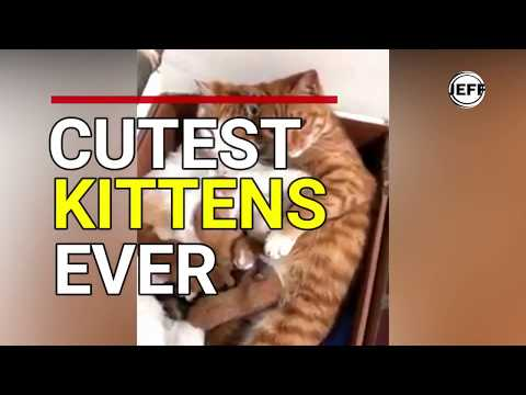 Cutest Kitten Compilation 2018