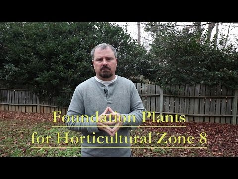 Great Low Maintenance Foundation Plants For Horticultural Zone 8. Part 1