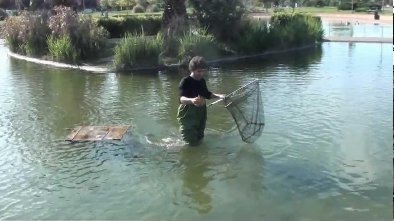 A semproniano le tartarughe acquatiche di grosseto youtube for Tartarughe laghetto
