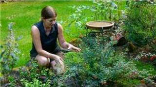 Planning & Maintaining An Edible Garden : How To Landscape A Butterfly Garden