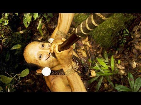 Il chasse le singe à la sarbacane de 4 mètres  - ZAPPING SAUVAGE