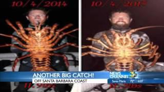 Santa Barbara Man Catches Big Lobster While Diving Off Coast