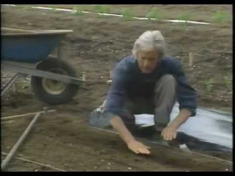 Eliot Coleman's Technique for Direct Sowing Seeds & Spacing