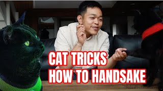 CAT Tricks: How to Handshake!