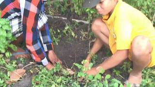 Amazing Smart Boy And Brother Catch Big Snake Using Deep Hole Snake Trap With Water Pipe