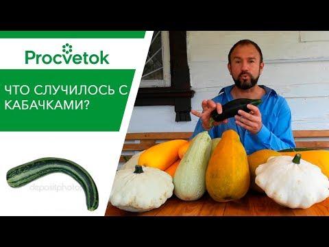 Вопрос: Июль – у тыквы нет завязей, урожая уже не будет (см)?