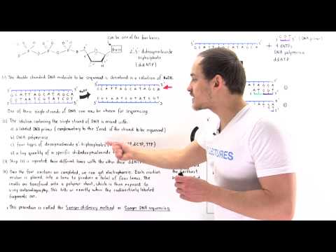 Sanger Sequencing of DNA
