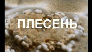 Что скрывает плесень (2015)(, 2015-12-24T08:13:46.000Z)