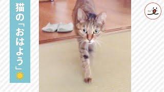 朝の挨拶、甘えん坊猫ちゃんのおはよう😻【PECO TV】 thumbnail