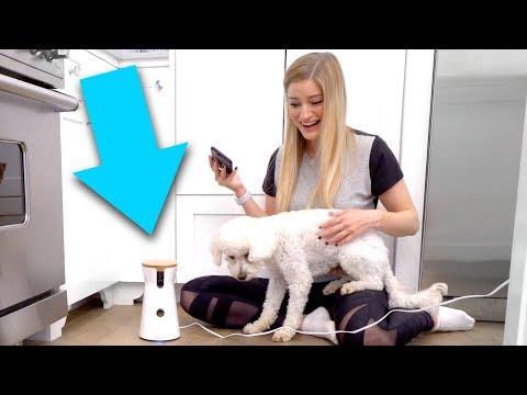 🐶 iPhone Dog Treat Tosser!