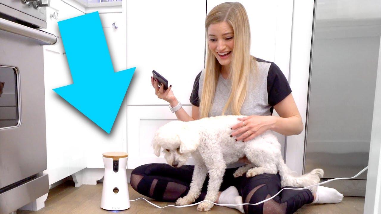 iphone-dog-treat-tosser