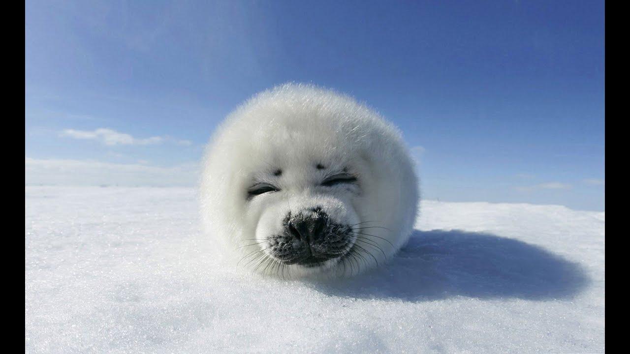 çok Soğuk Hava Koşullarında Hayvanlar Nasıl Hayatta Kalır Youtube