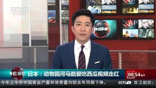 [今日环球]日本:动物园河马酷爱吃西瓜视频走红| CCTV中文国际 - YouTube
